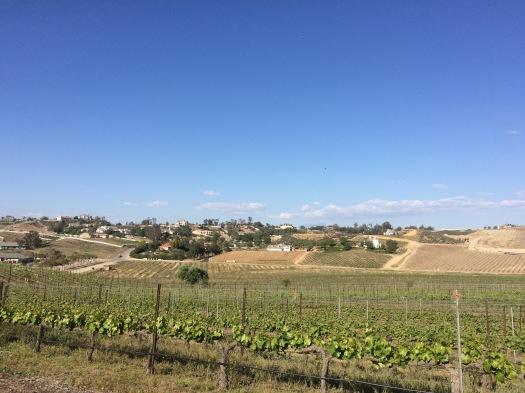 Vindemia Winery, wine tasting in Temecula CA