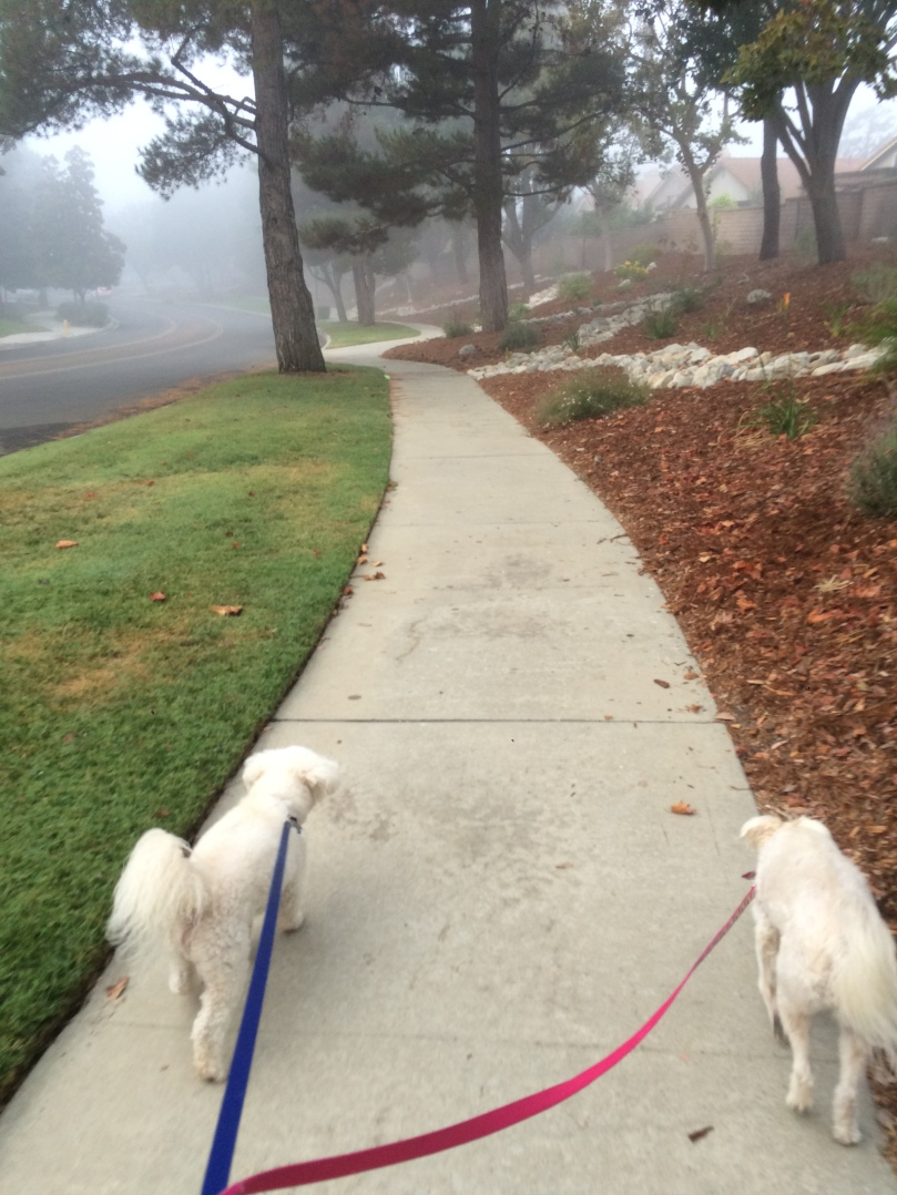 The Power of Habits: Morning walk with Radar and Kacie
