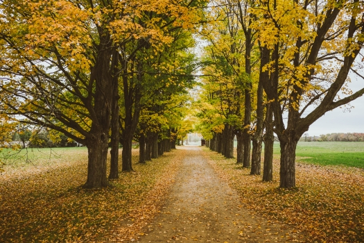 boss-fight-free-stock-images-image-photos-photo-photography-row-trees-fall-autumn