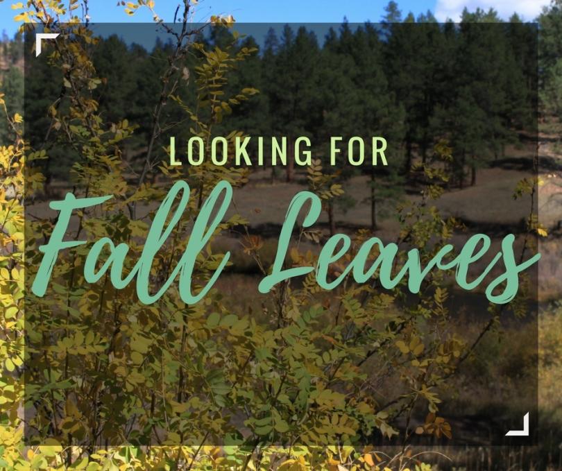 Looking for Fall | amandabixler.com