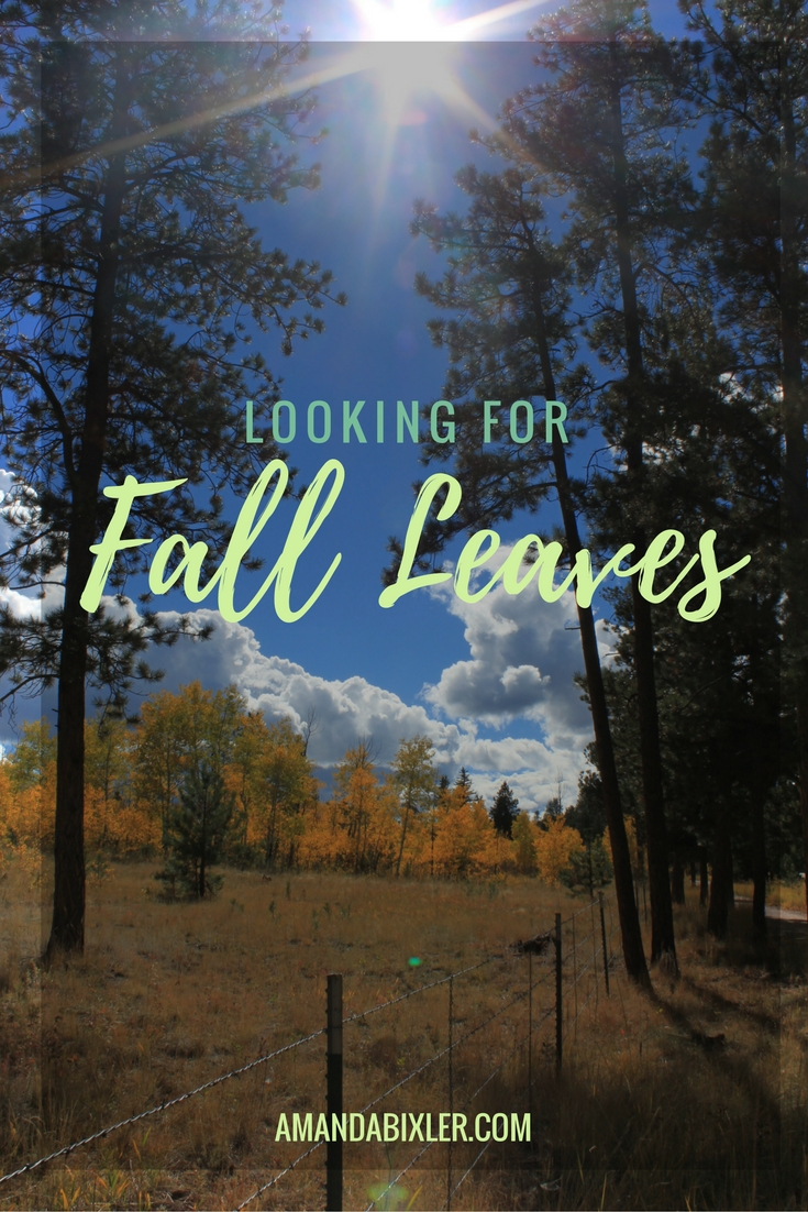 Looking for Fall | amandabixler.com